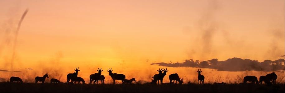 Mara Toto Camp Great Plains Kenya